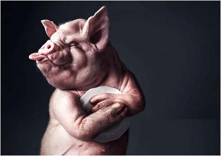 kanibal_cochon